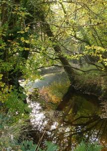 Sheinton Brook 2