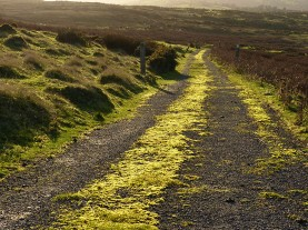 Mossy road