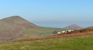 Caer Caradoc and sheep