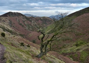 Town Brook tree