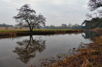 Tern tree