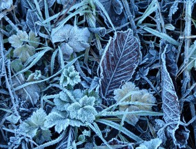 Lingering frost