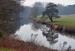 Tern tree two
