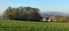 Woodland and Wrekin