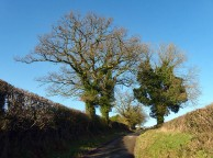 On up the lane
