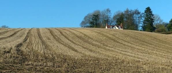 Remnant of last season's crop