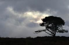 Mynd tree