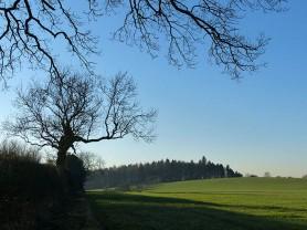 Woodland on the edge