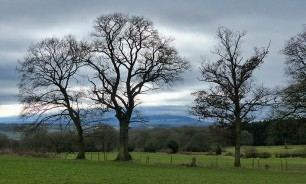 Trees and Clee