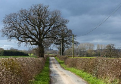 Back along the lane