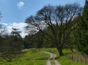 Parkland walk