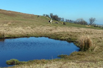 Pond and ponies by Newhouse Hill