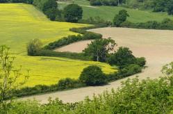 Zig-zag hedge