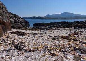 A shelly shore