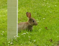 Small rabbit...