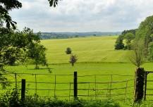 Aldenham fields