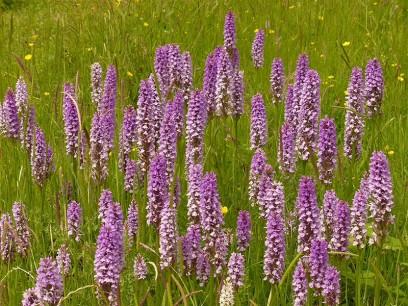 Orchids 167