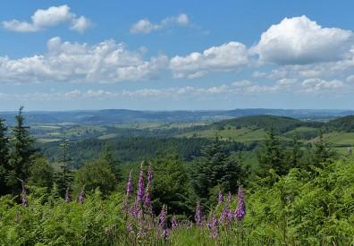 Foxgloves and Welsh hills: High Vinnals view