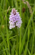 An orchid in the grass
