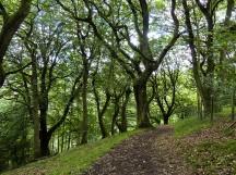 Ragleth Wood