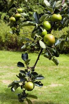 A fine crop coming