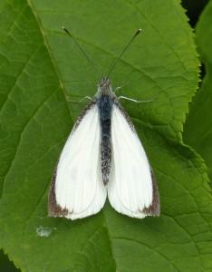 Lounging large white