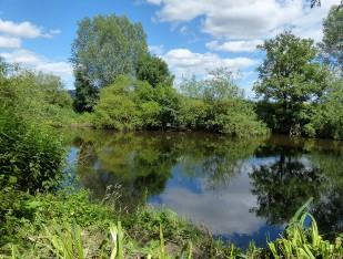 Reflections in the Severn