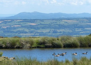 Malverns and Canada geese