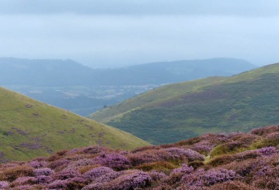 Heather and hillsides