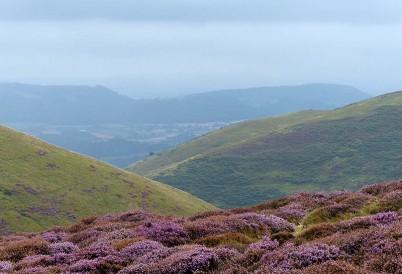 Heather and hillsides