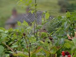 Spider's jewellery