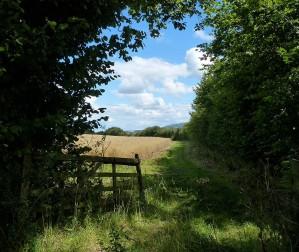 Cornfield corner