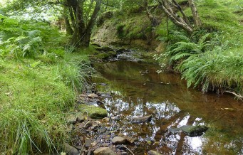 Moorland watercourse