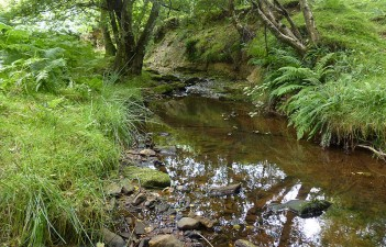 Moorland watercourse