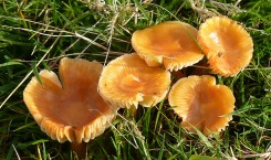 Frilly toadstools