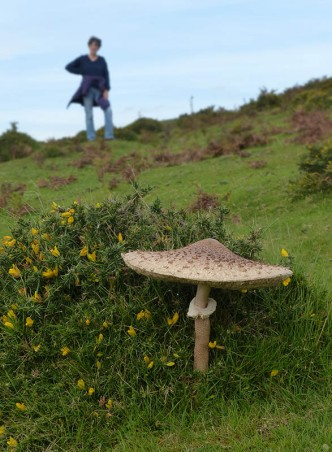 Small or far away?