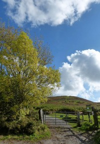 Bottom of the lane