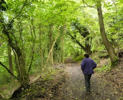 Benthall Edge woods