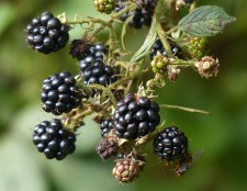 It's not October yet