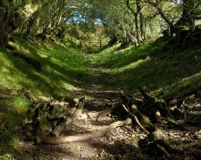 Top of the lane
