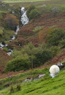 Waterfall and sheep
