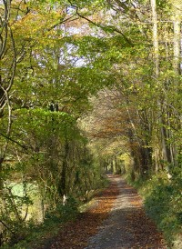 The old waggonway