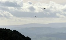Kites over the Stiperstones