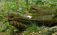 Crocs in the woods