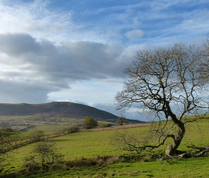 Tree and Corndon Hill