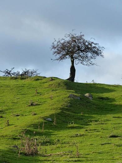 Skyline tree
