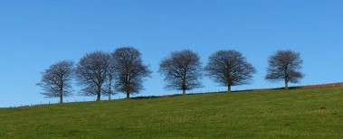Tree-line