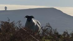 I'm watching ewe