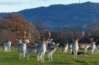 Family group with a Wrekin backdrop