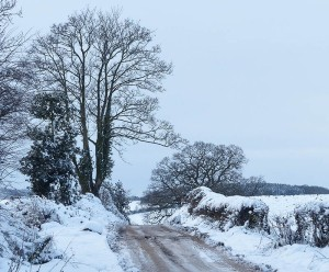 Wintry lane